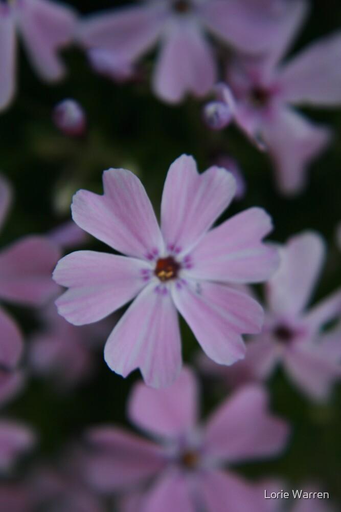 Tiny purple flower by Lorie Warren