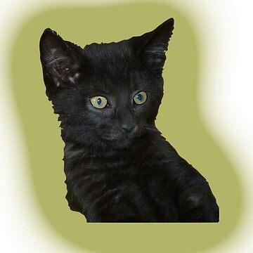 Cute Black Kitten by IanMcK