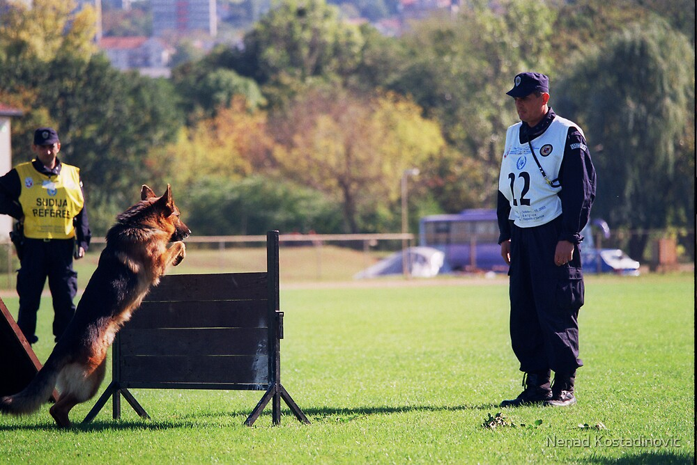 K9 training by Nenad Kostadinovic