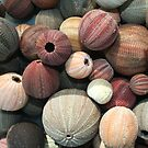 Sea Urchins  by tracyleephoto