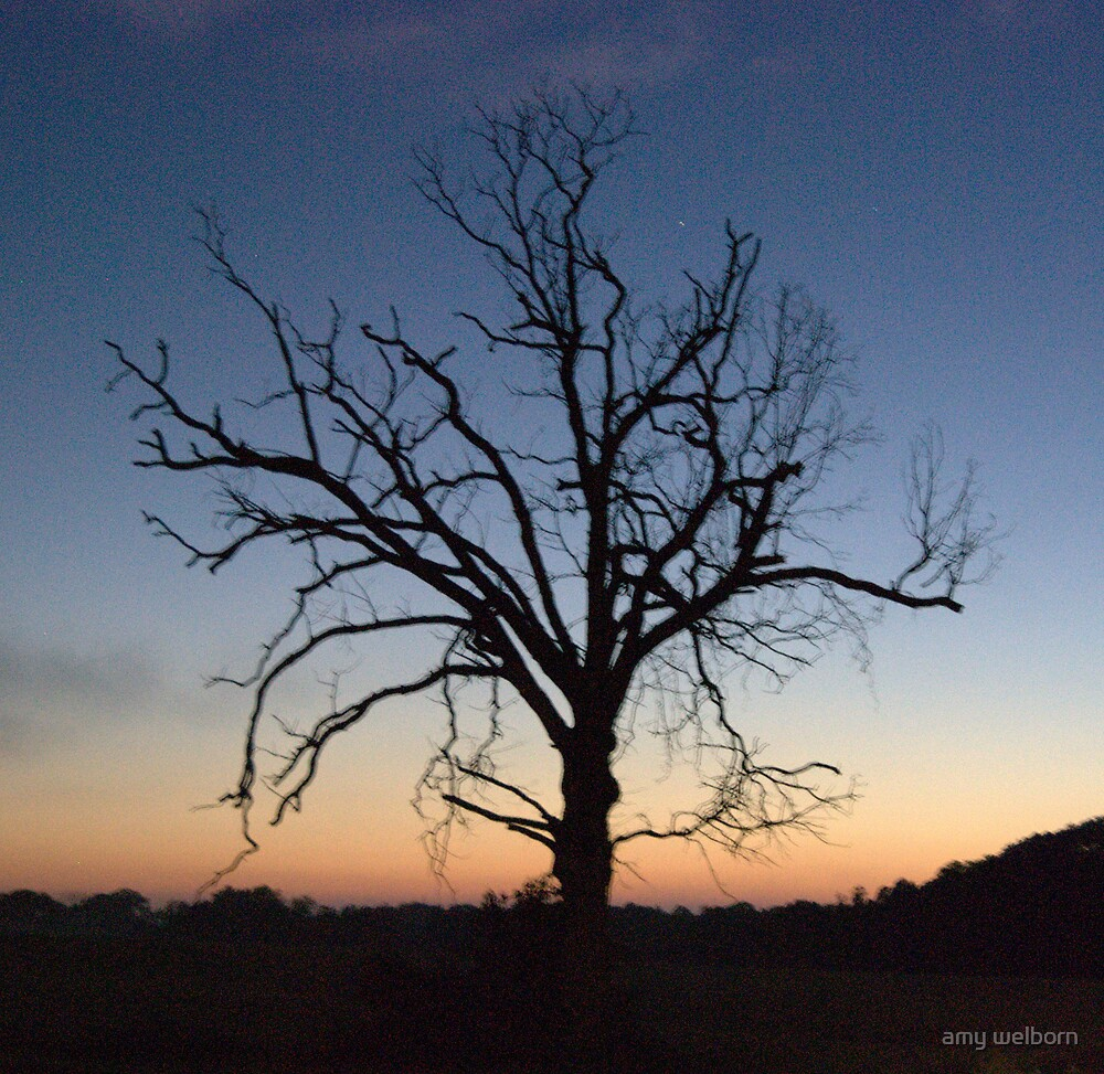 just a trace... by amy welborn