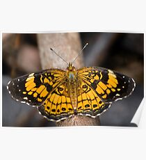 Pearl Crescent Butterfly Poster