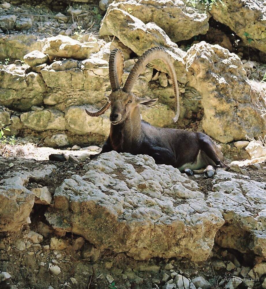 The King Of The Rocks by Amber Finan