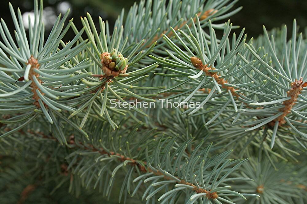 Evergreen Macro by Stephen Thomas