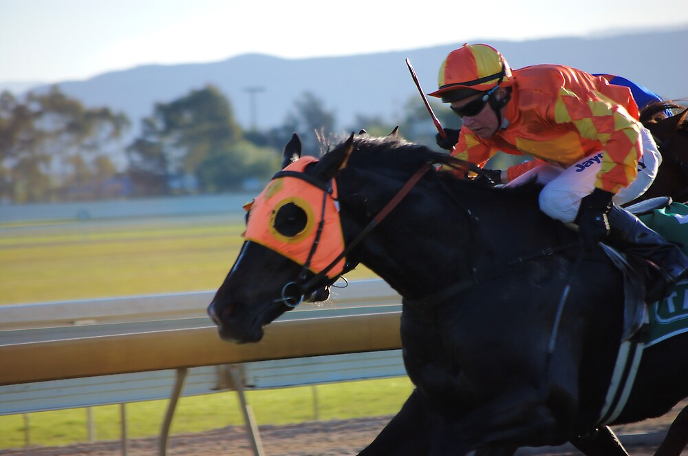The horses are on the track! by David  Hall