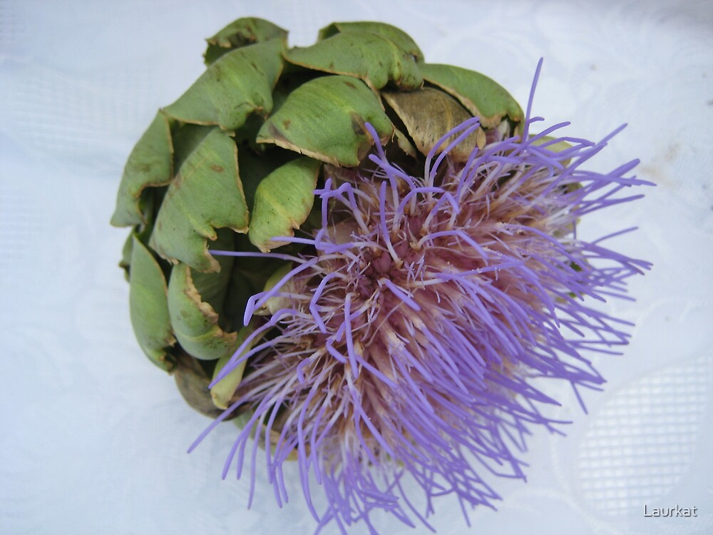 blooming artichoke on lace tablecloth by Laurkat
