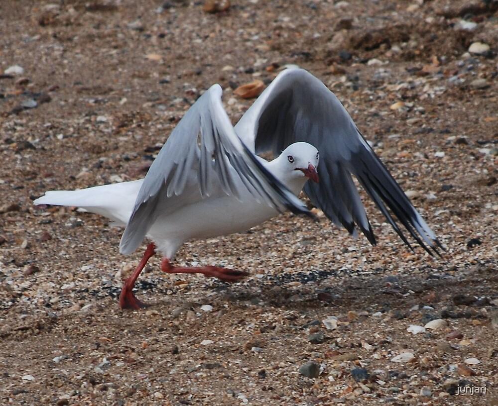 Dancing gull by junjari