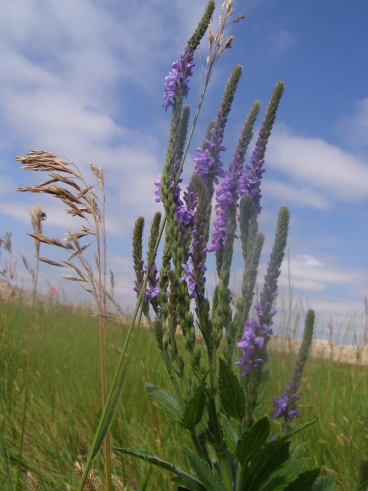 Prairie Winds by SongbirdBreid