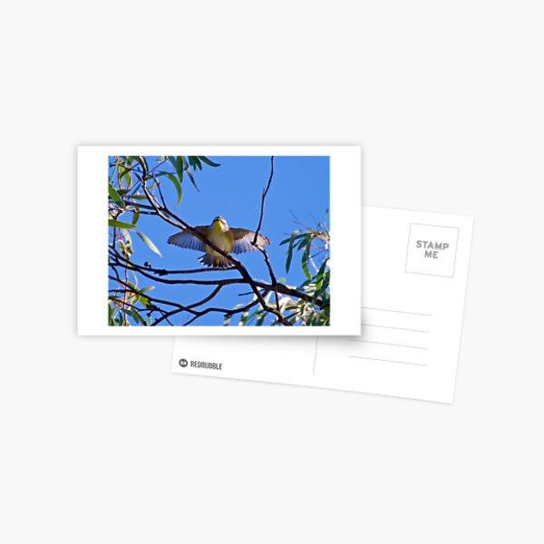 PARDALOTE ~ Striated Pardalote TDiJMThS by David Irwin Postcard