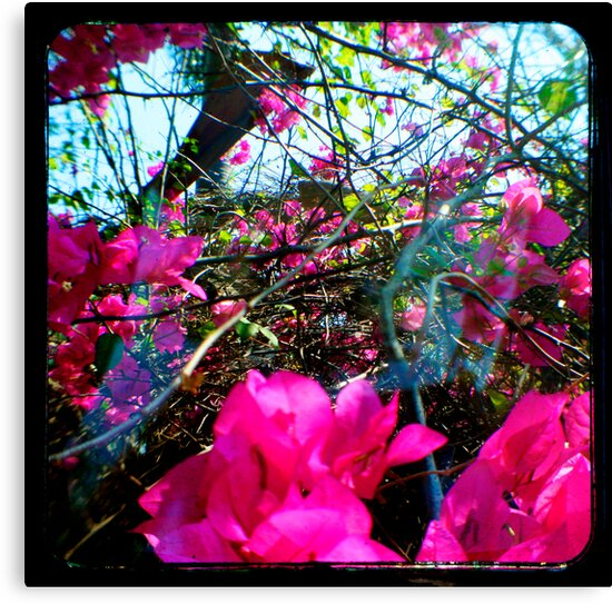 Pink Delight by Jules Campbell