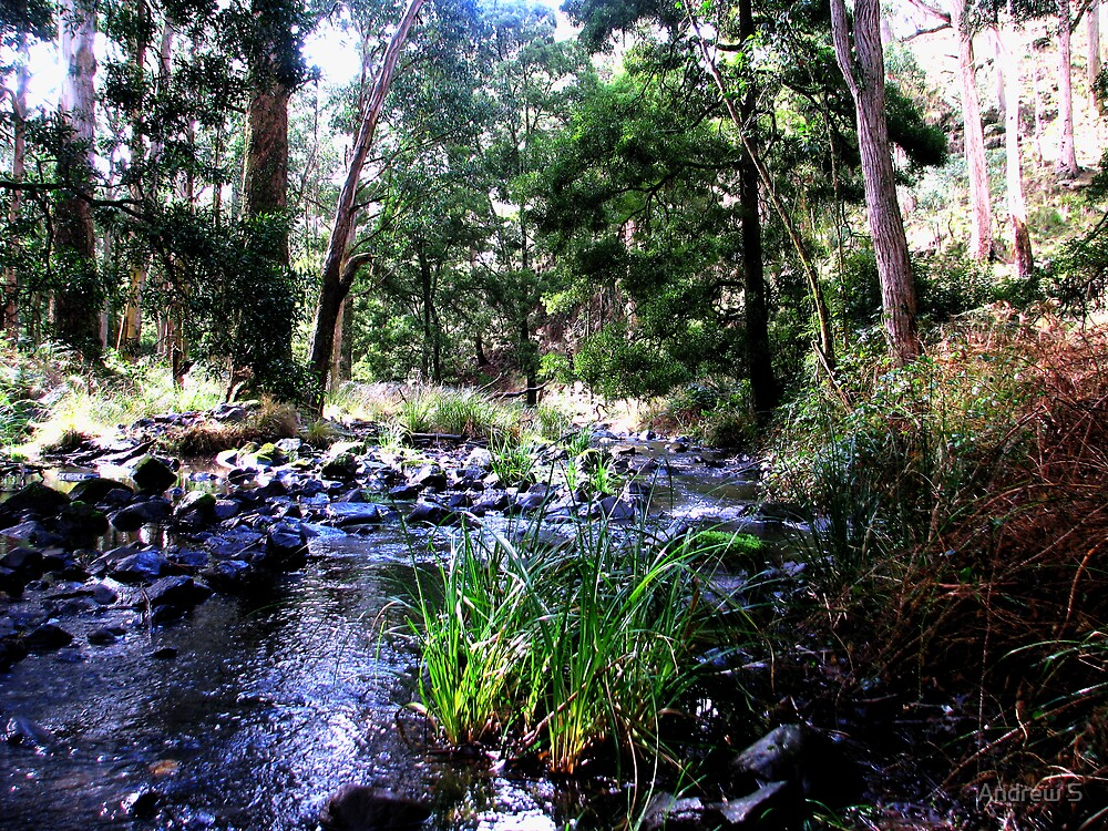 Down The Forest Stream by Andrew S