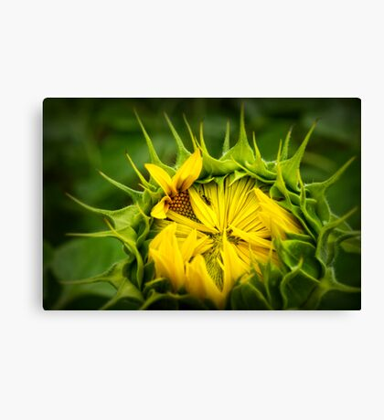 The ant Canvas Print