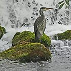 Waiting at the Falls by Graeme  Hyde