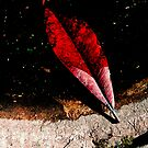 red leaf on edge by ragman