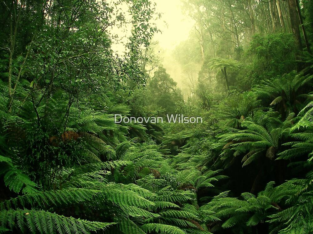 tree fern vista by Donovan Wilson