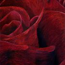 Red Rose II by Erika .