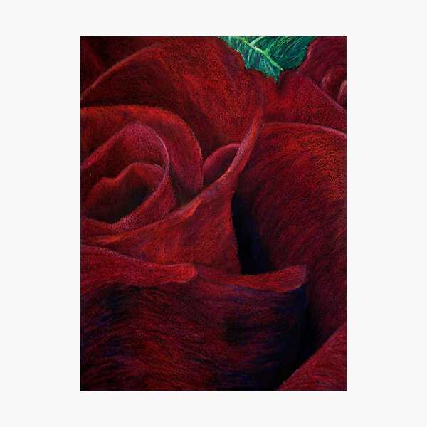 Red Rose II Photographic Print