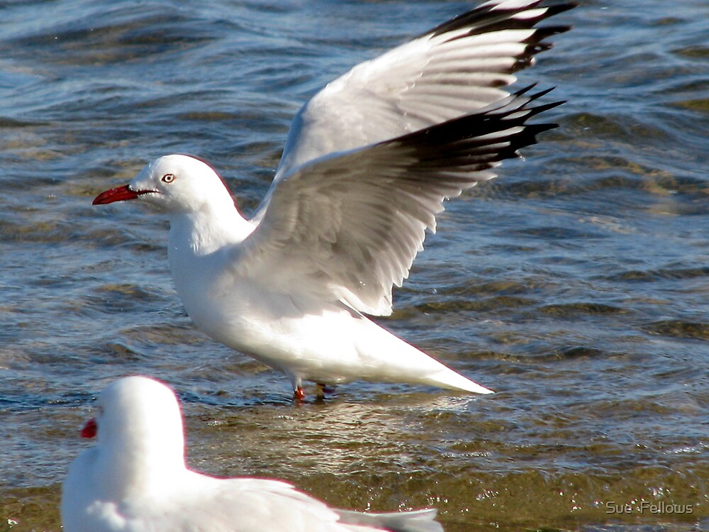 """""""On The Wings of a Seagull"""" by Sue  Fellows"""