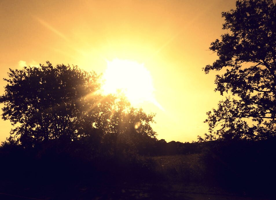 Sunshine over the treetops by Georgee