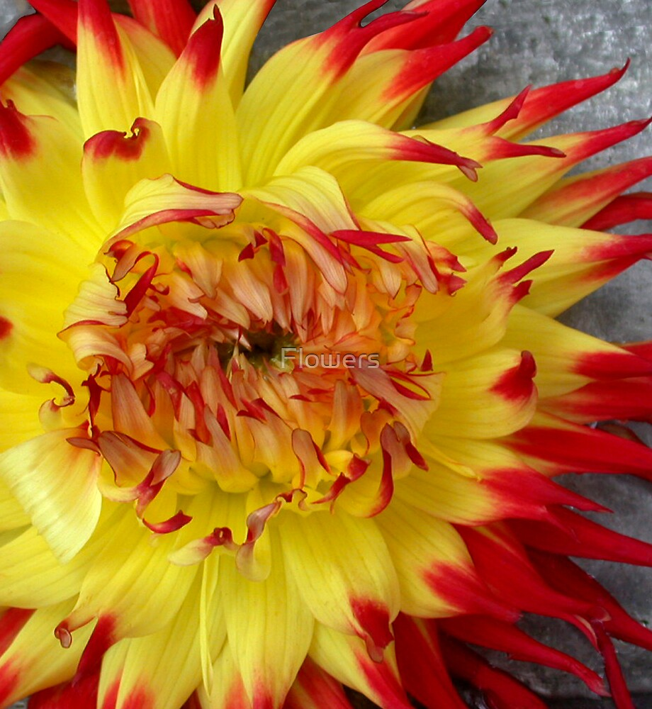 War Paint by Flowers
