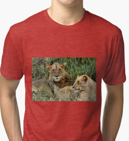 THE COUPLE - THE LION – Panthera leo Tri-blend T-Shirt