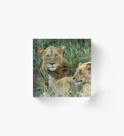 THE COUPLE - THE LION – Panthera leo Acrylic Block