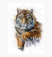 Tiger watercolor predator Photographic Print