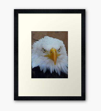 Eagle 3 Framed Print