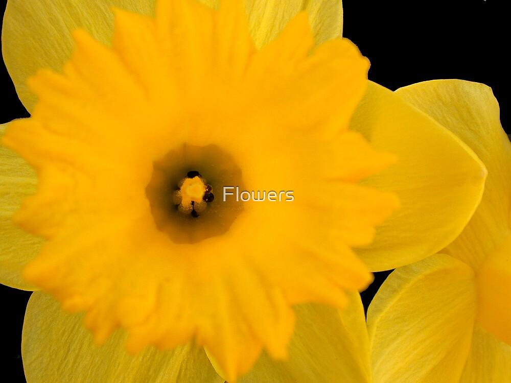 Tweety Bird by Flowers