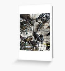 Yabby   - Magpie Springs - Adelaide Hills Wine Region - Fleurieu Peninsula - South Australia Greeting Card