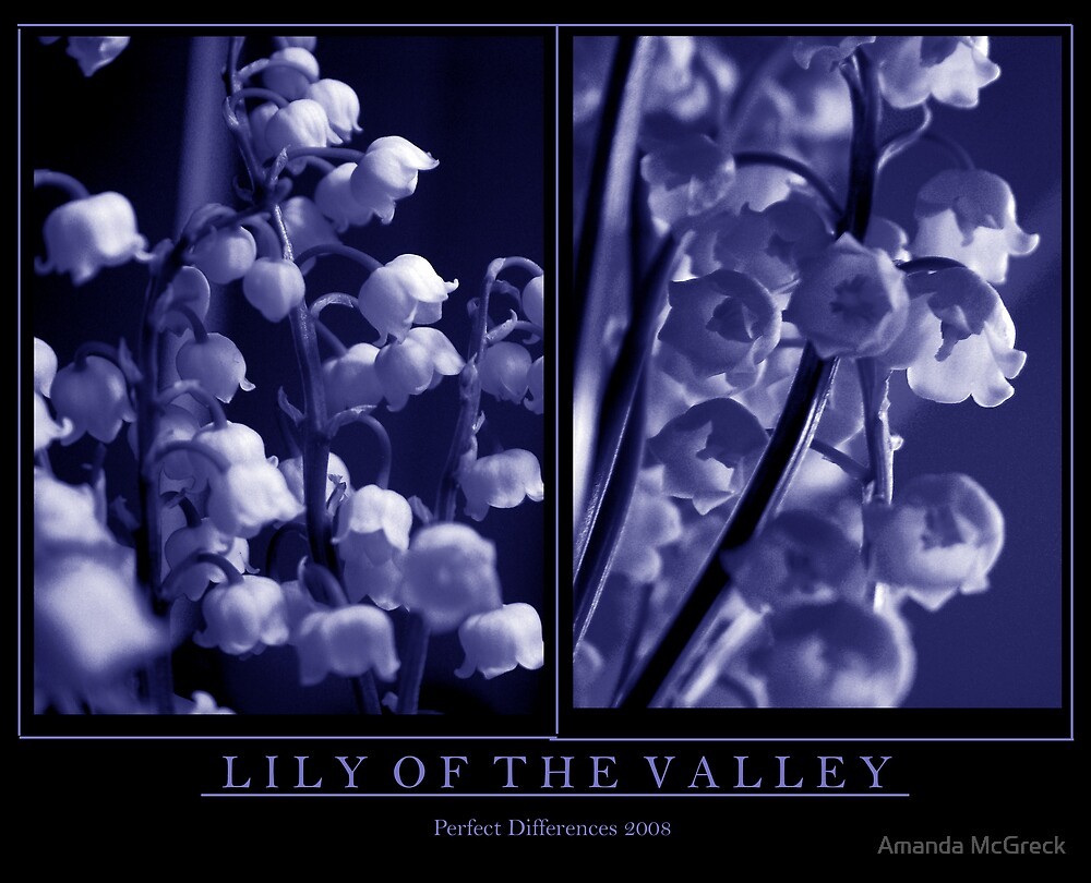 Lily of the Valley by Amanda McGreck