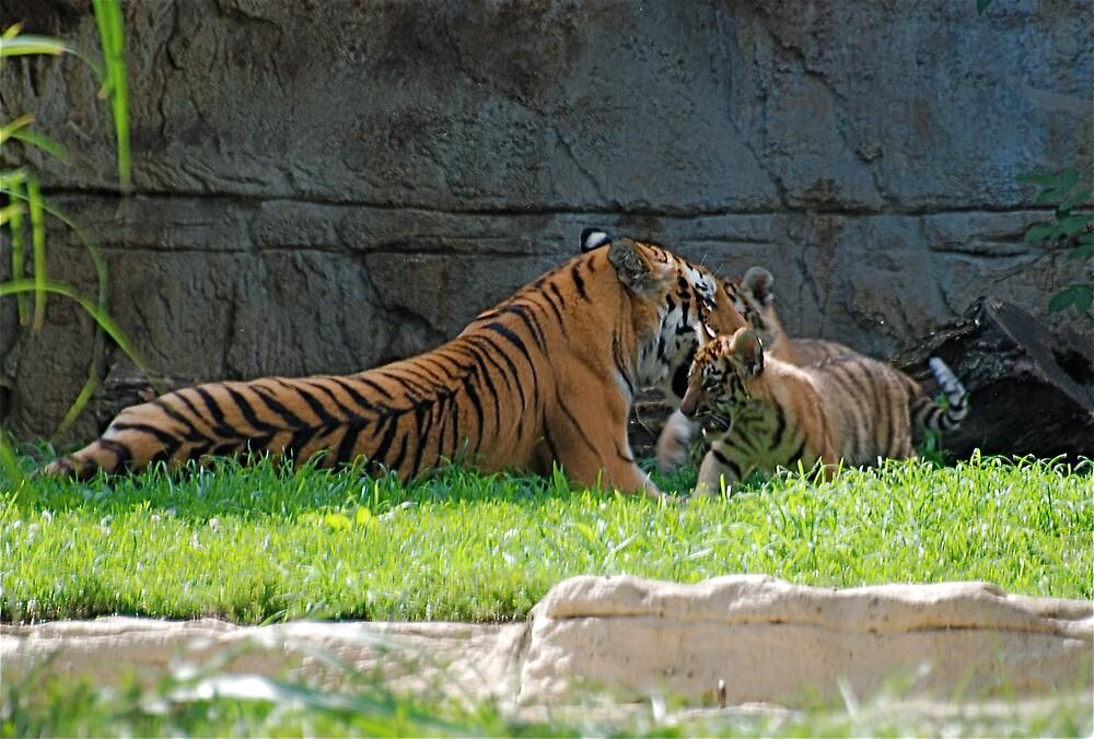 Tiger and Babies at play by Jim Caldwell