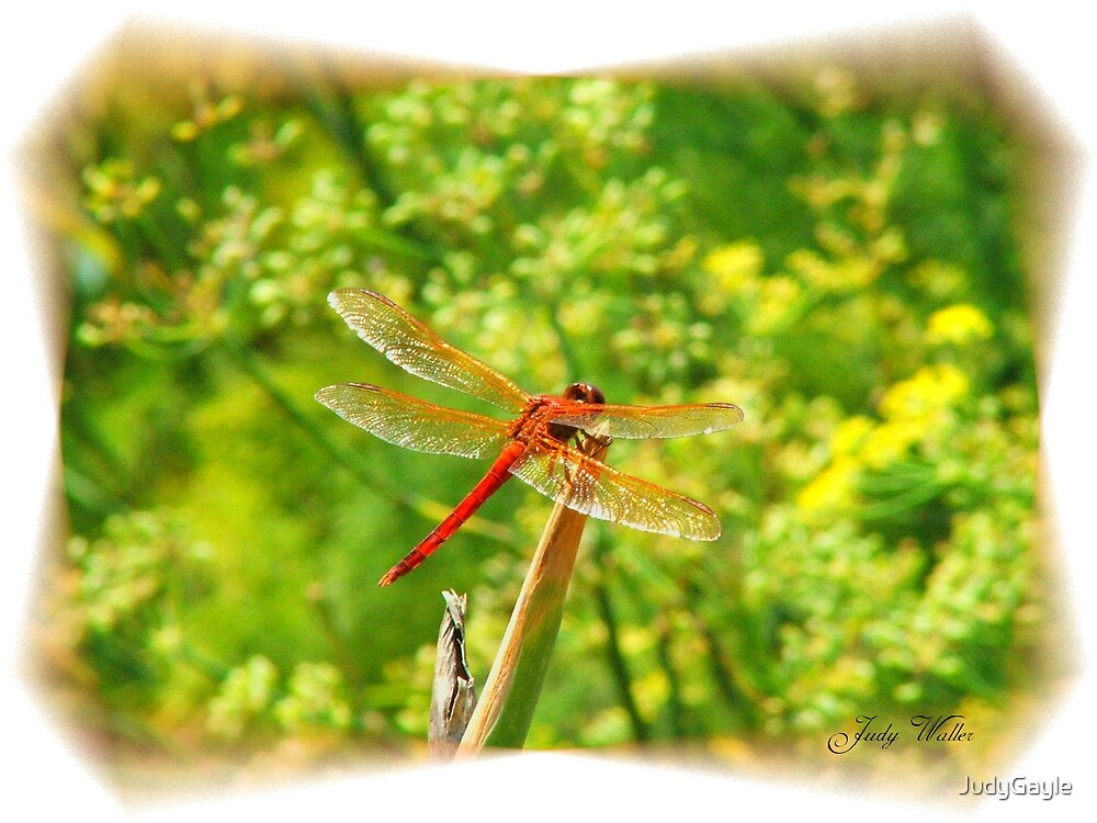 Dragonfly by Judy Gayle Waller