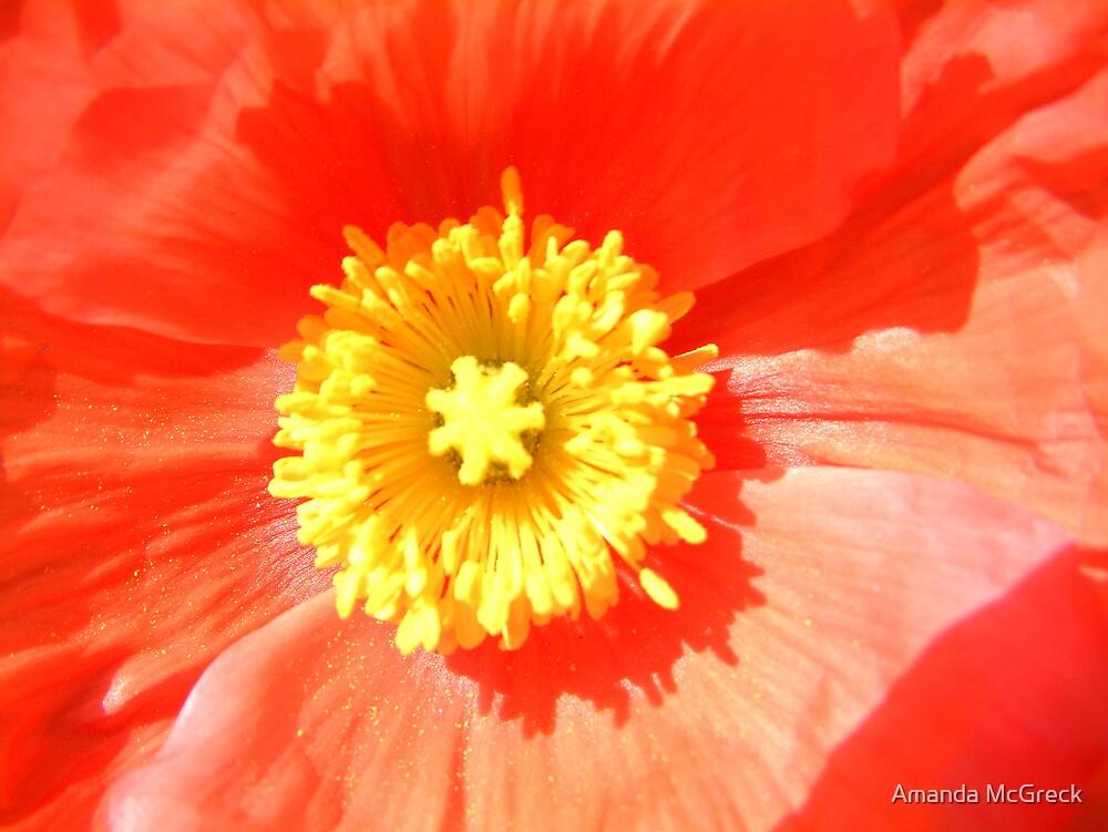 Poppy by Amanda McGreck