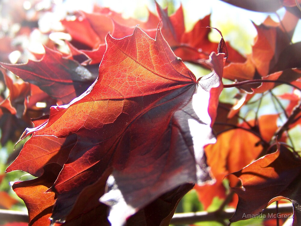 Autumn Leaves by Amanda McGreck
