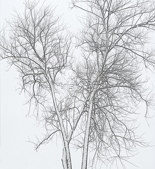 Winter Tree - straight from camera by trish725
