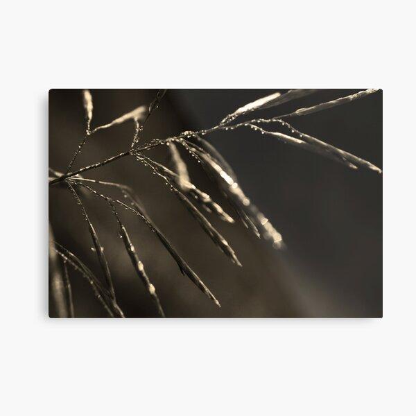Dreamcatcher: Meteor Metal Print