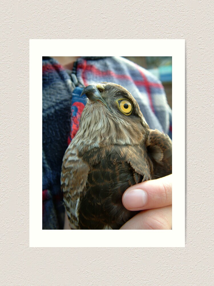 Alternate view of A Bird in the hand... Art Print
