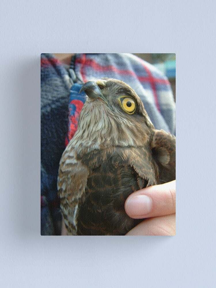 Alternate view of A Bird in the hand... Canvas Print