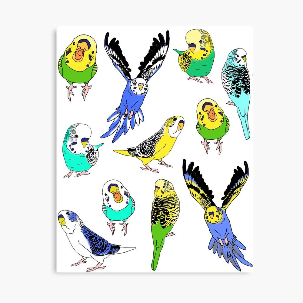 budgie doodle pattern Canvas Print