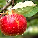 The Apple by JEZ22