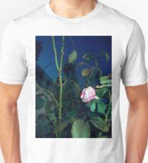 pink n white rosebush 09/04/17 T-Shirt
