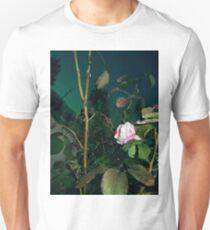 pink n white rose 2 09/04/17 T-Shirt