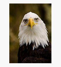 Portrait of a Bald Eagle Photographic Print