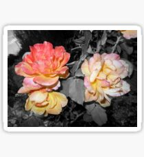 multi pink yellow roses 09/01/17 Sticker