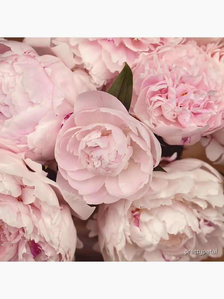 Pink Peony Flowers by prettypetal