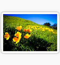 Field of California Poppies Sticker