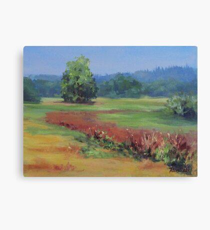 Summer Refuge Original Plein Air Painting Canvas Print