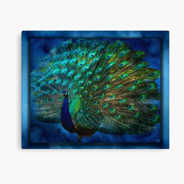Being Yourself - Peacock Art Canvas Print