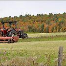 Harvest Break by Todd Weeks